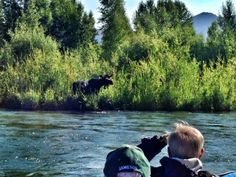 Moose Spotting! - Scenic River Float with Dave Hansen Whitewater  Book online at www.davehansenwhitewater.com or give us a call at (307) 733-6295