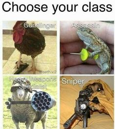 I don't know why, but the thought of an adorable chicken gunslinger or a war-hardened special weapons sheep is amazing. Not to mention lizard assassins are an RPG classic. More memes, funny videos and pics on Really Funny Memes, Stupid Funny Memes, Funny Relatable Memes, Haha Funny, Funniest Memes, Funny Stuff, Hilarious, Animal Jokes, Funny Animal Memes