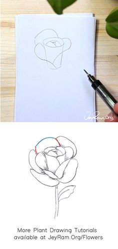 How to Draw a Rose : Step by Step for Beginners — JeyRam Art Roses Drawing Tutorial, Flower Drawing Tutorials, Rose Tutorial, Leaf Drawing, Floral Drawing, Step By Step Painting, Step By Step Drawing, Drawing For Beginners, Beginner Drawing
