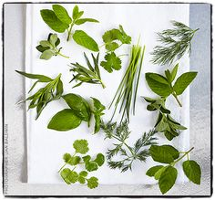 Do you know what to do with each of these herbs?