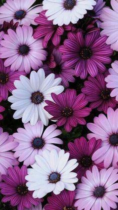 Purple Flowers Wallpaper, Sunflower Wallpaper, Flower Background Wallpaper, Beautiful Flowers Wallpapers, Beautiful Nature Wallpaper, Scenery Wallpaper, Pretty Wallpapers, Vintage Flower Backgrounds, Purple Flower Background