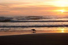 Newport Beach Oregon