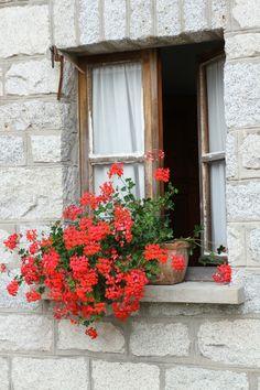 Alpine Cottage Window - Italy (Clicked by me)