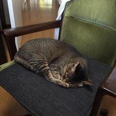 アイさん熟睡中 #cat #猫