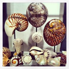 Shell company - who doesn't love an accessory from nature that recalls a far off land?