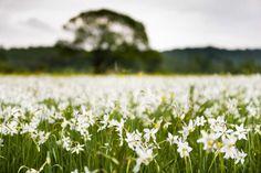 10 tavaszi kirándulóhely Mo-on