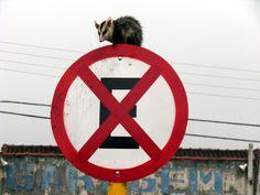 Estacionamento em local proibido na cidade de Bauru/SP (Foto: Foto: Marcus Liborio/Jornal da Cidade)
