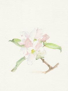 Apple blossom, Original Watercolor painting, Still life spring painting, watercolor painting art.