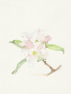 Apple blossom, Original Watercolor painting, Still life spring painting, watercolor painting art.