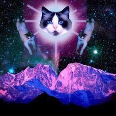 mew kitteh
