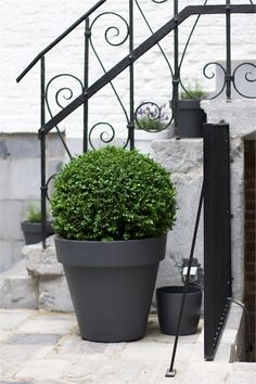 box plants are great, evergreen and sculptural they add year round interest to the smallest outdoor space...
