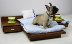 Dog Beds - 35 Pictures