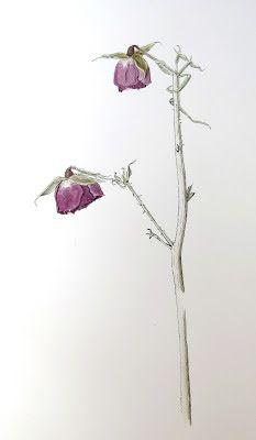 Ilustración botánica: Feliz Sjuttende mayo para nuestros lectores noruegos