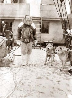 """Admiral Robert Peary with dogs on deck of """"Roosevelt"""" during his Artic Expedition in search of the North Pole. Admiral Peary is generally credited as being the first person to reach the North Pole. This Photograph was made in 1907."""