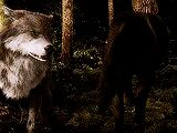 """ ✚ WOLF/WEREWOLF GIF HUNT ✚ "" As requested by myself, here is a gif hunt containing #418 small, hq gifs of wolves/werewolves/shape-shifters. These gifs are from The Twilight Saga and can be used in..."
