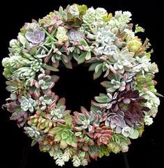 Another succulent wreath