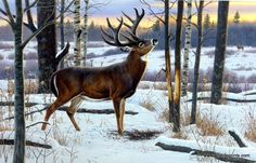 Artist Cynthie Fisher Wildlife Whitetail Deer Print The Jordan Buck | WildlifePrints.com