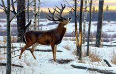 Artist Cynthie Fisher Wildlife Whitetail Deer Print The Jordan Buck | WildlifePrints.com