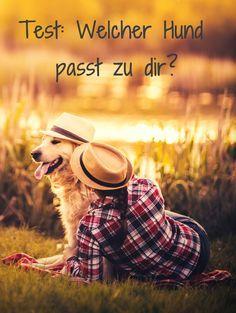 Finde jetzt heraus, welcher Hund perfekt zu dir und deinem Leben passt: http://www.gofeminin.de/psychotests/test-welcher-hund-passt-zu-dir-s1600830.html