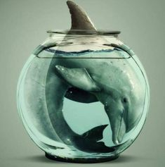 End Dolphin Captivity