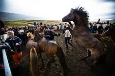 Iceland Horse Riding Vacations Various Locations, Iceland