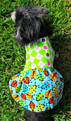 Pet Clothing  Pinwale Corduroy Toy Breed by BloomingtailsDogDuds, $23.95