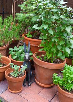 Terra cotta pots in Miss Kim's garden.