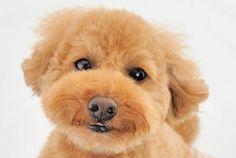 楽しい室内飼いのための『本当に相性の良いわんこがわかる本』  http://www.roomie.jp/2012/04/50/
