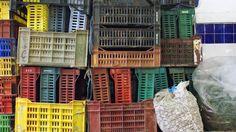 Produce bins at a market in Tunis, Tunisia.
