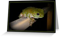 Hangin' About! - Another night visitor hangin' about on our front rail. Green Tree Frog.