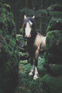 Beautiful horse in the woods. Selkie Meg