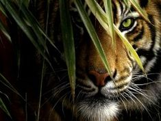 Beautiful wildlife paintings by talanted award-winning artist Collin Bogle. These stunning images look like photos. Beautiful wildlife paintings by talanted award-winning artist Collin Bogl Nature Animals, Animals And Pets, Cute Animals, Animals Images, Tiger Wallpaper, Animal Wallpaper, Hd Wallpaper, Windows Wallpaper, Wallpaper Ideas