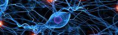 Descargas para trabajar estimulacion cognitiva