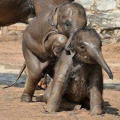I have melted my heart. ...so lovely..@1005.alejandra - @joyful_elephants Bestie tag your bestie . #elephant #elephants #elephantlove