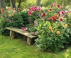 Love the garden bench made with tree stumps... the colors of the flowers just burst!