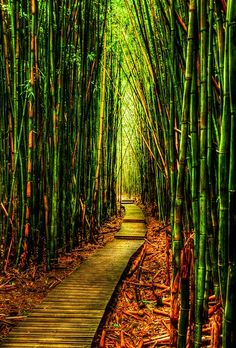 Bamboo Forest-Kauai, Hawaii.. Been here
