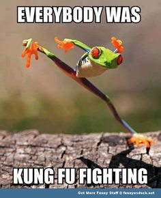 funny animal memes | kung fu frog animal animals memes funny pics pictures pic picture ...