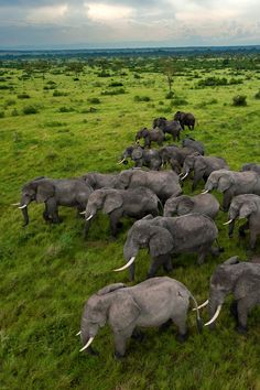 Uganda, Queen Elizabeth Park. Photograph by Joel Sartore, National Geographic