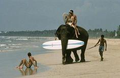 Surf elephant session