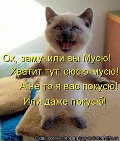 А не то я вас покусю! Или даже покусю!           Хватит тут, сюсю-мусю! Ох, замучили вы Мусю! Animals And Pets, Funny Animals, Animal Jokes, I Love Cats, Cat Art, Memes, Animals Beautiful, Cats And Kittens, Funny Cats