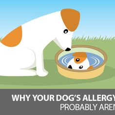 Dr Maria Ringo discusses the difference between dog allergies and food sensitivities and what can be done to alleviate the symptoms.