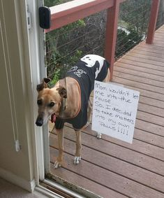 Mom wouldn't let me into the house …so I decided to take matters into my own paws!!! #funnydogshaming