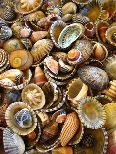 A beautiful variety of shells!!!