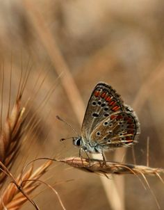 """""""Small Butterfly."""" by Necdet Yasar, via 500px."""