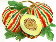 Kajari Melon, Cucumis melo, Indian Melon, Joseph Simcox, The Botanical Explorer, Explorer Series
