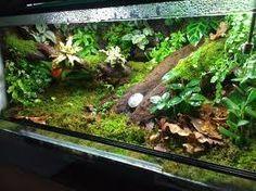 dart frog vivarium - Google Search