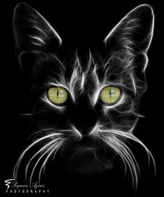 (I) (i) por Peyman Az - Gatos Animal Paintings, Animal Drawings, Black Paper Drawing, Beginner Painting, Cat Drawing, Drawing Tips, Fractal Art, Rock Art, Cat Art