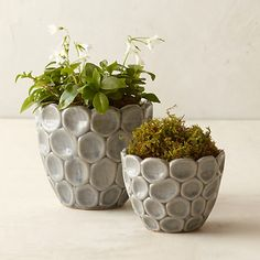 A contemporary pattern of stacked circles adds texture to this ceramic vessel Ceramic Indoor or outdoor use Drainage hole not included ImportedSmall 475 diameter. Hand Built Pottery, Slab Pottery, Ceramic Pottery, Thrown Pottery, Pottery Vase, Ceramic Planters, Ceramic Clay, Ceramic Bowls, Ceramic Pinch Pots