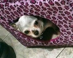 Peeking out to say goodnight! Life is Good! XOXO