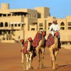 Ride a Camel and drive the Sand Dunes in Abu Dhabi, United Arab Emirates.